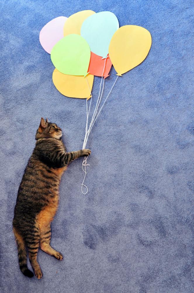 Идеи кота