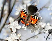 Интересный рисунок бабочки