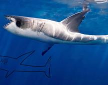 Акула, нарисованная ребёнком