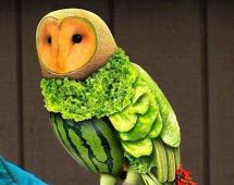 Арбузо-дынная сова