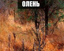 Незаметный олень