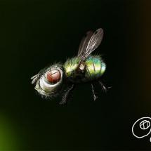 Детский рисунок мухи