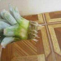 Верхушка ананаса растёт!